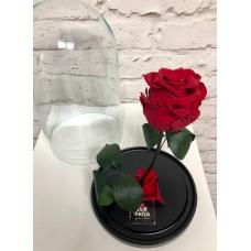 Роза в колбе (красная)