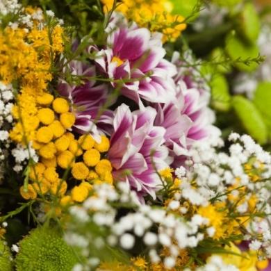 7 прекрасных цветов для поднятия настроения
