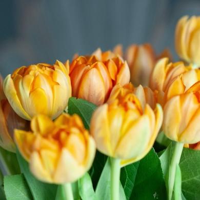 Как сохранить тюльпаны подольше в вазе?