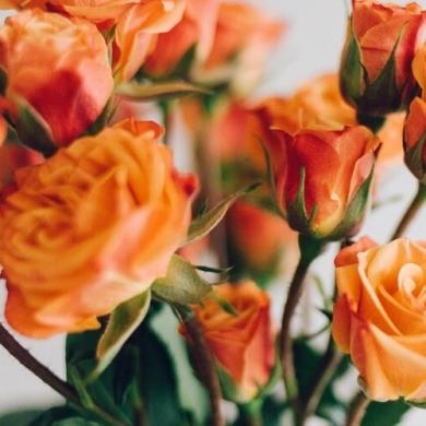 К чему дарят оранжевые розы?