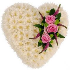 Сердечная хризантема