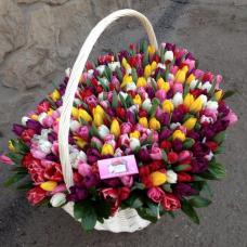 Роскошь тюльпанов