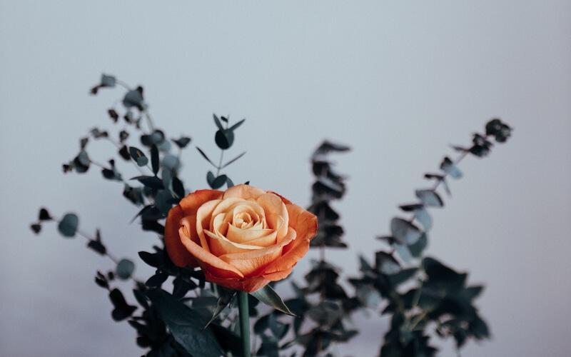 Что означают оранжевые розы